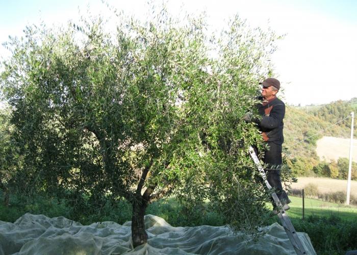 Agriturismo Bardanella - Uliveto